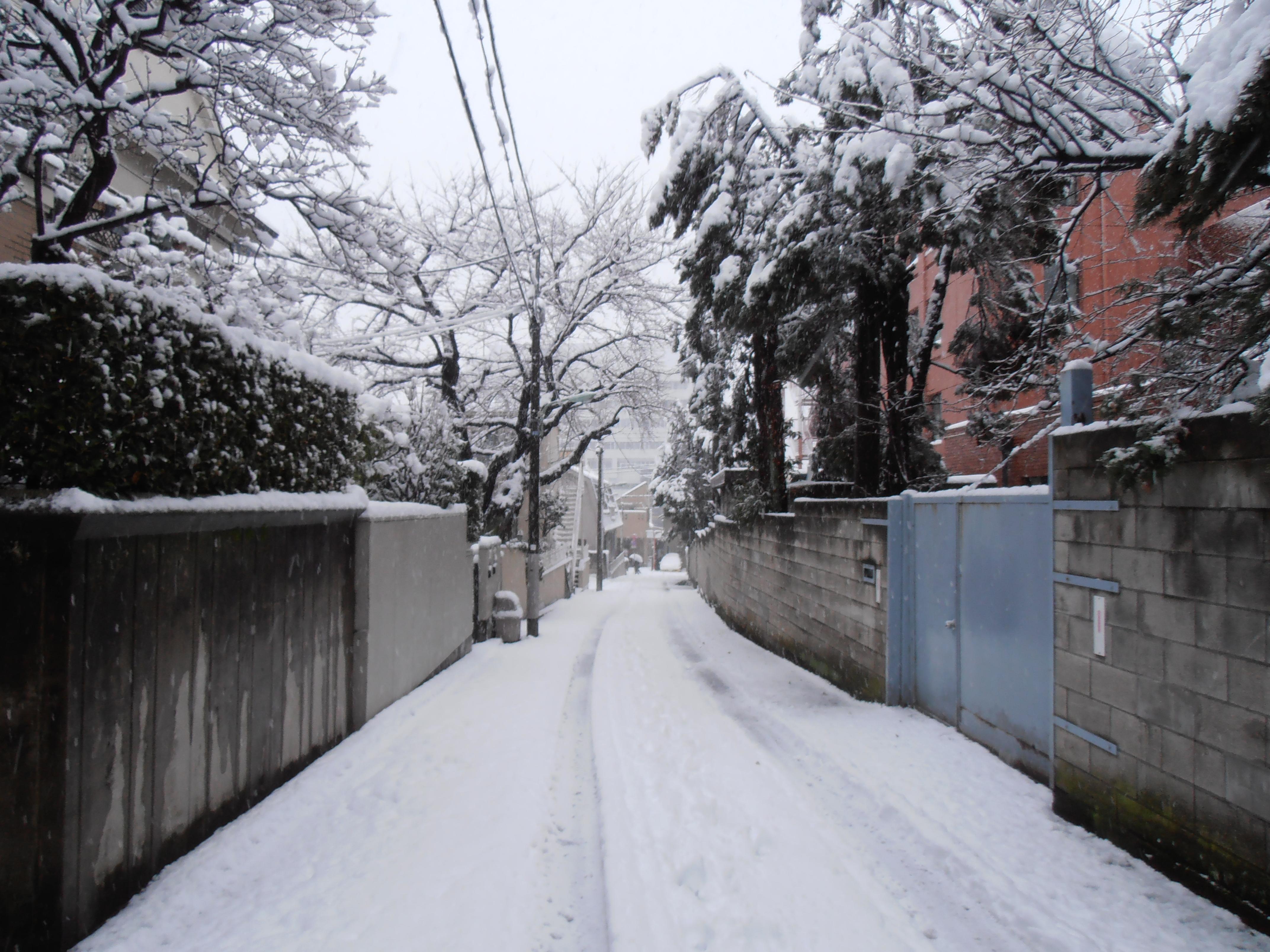 tokyo snow day tokyopurplegirl. Black Bedroom Furniture Sets. Home Design Ideas