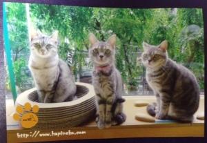 hapineko postcard