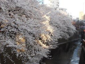 Naka Meguro 2