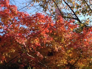 autumn colours kamiyacho